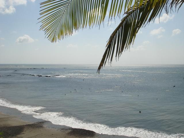 mar y hojas de palmera