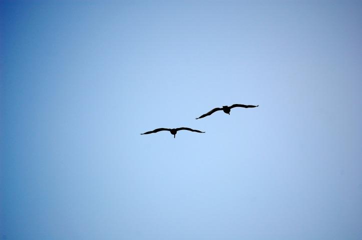 birds-1181869_1920.jpg