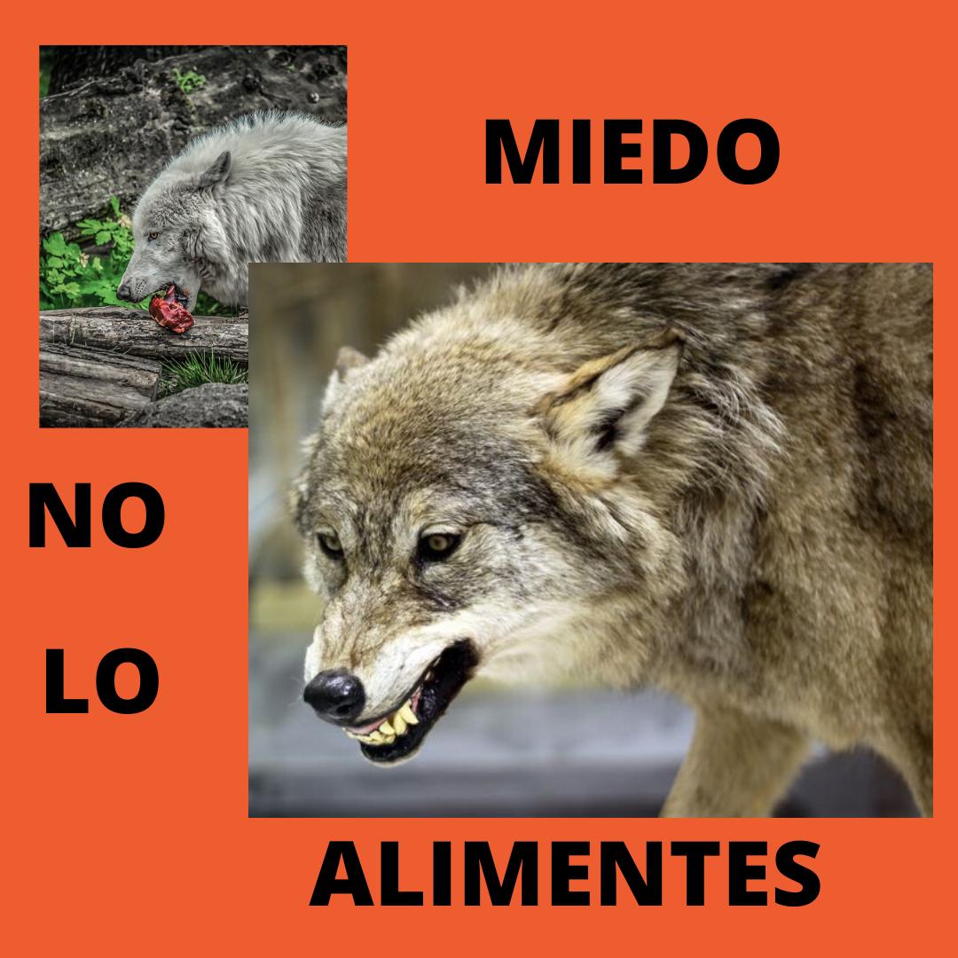 MIEDO (1)