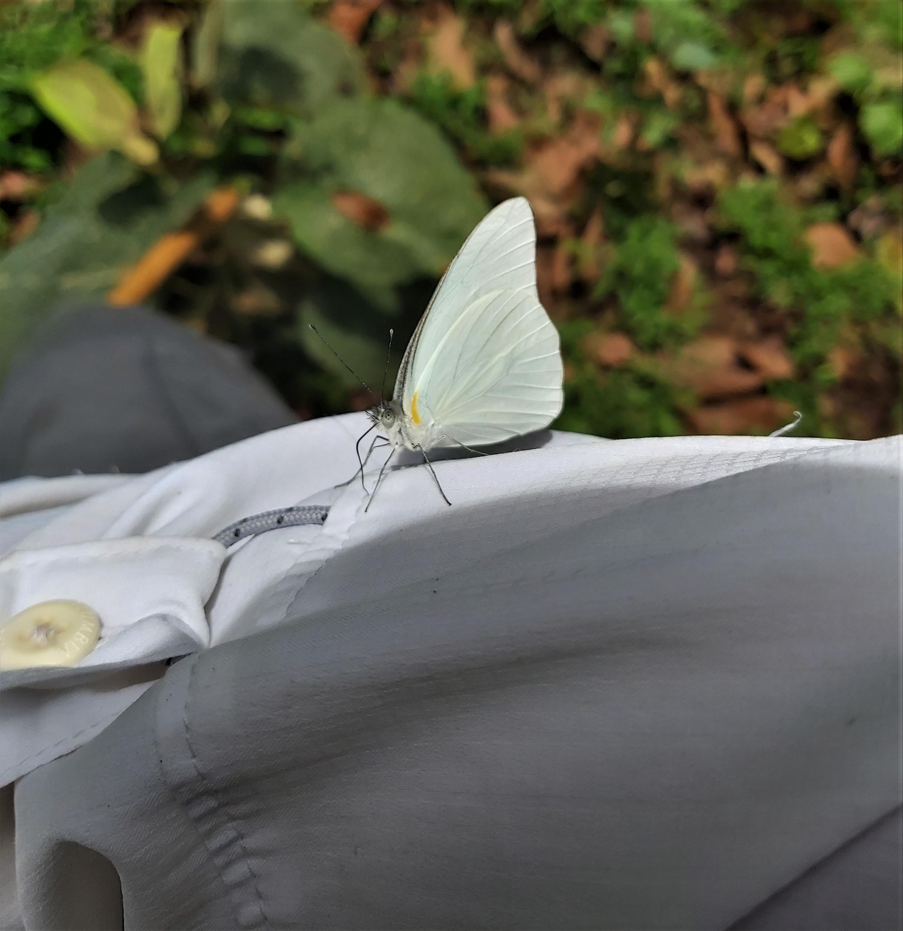 mariposa 2 cerca